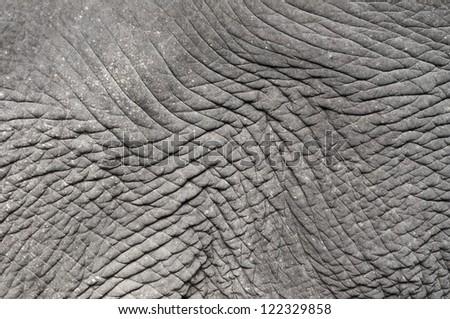 Closeup of elephant skin wrinkle detail - stock photo