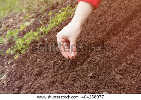 Closeup of female hand planting a seed in a fertile soil. Conceptual of agriculture and growth. Farmer planting plants in the ground. The idea of cultivation