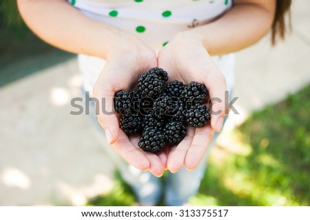 Closeup of female hands holding handful of blackberries outdoors in summer