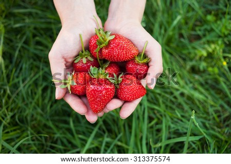 Closeup of female hands holding handful of strawberries on green grass background. Top view - stock photo