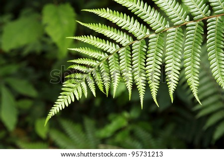 Closeup of fern leaves