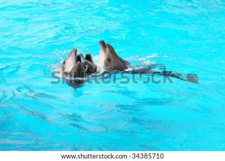 Closeup of four nice dolphins are playing in the blue water