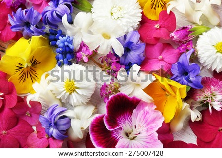 Closeup of fresh colorful spring flowers