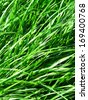 Closeup of fresh green grass - stock photo