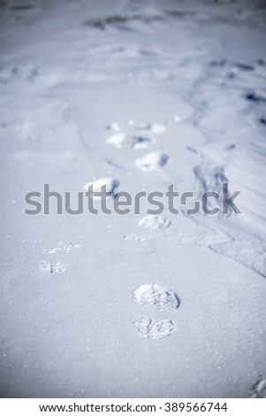 Closeup of fresh shoe prints in the snow - stock photo