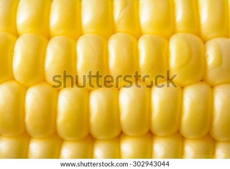 Closeup of Fresh Sweet Ripe Corn Seeds. Harvesting Background - stock photo