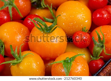 Closeup of fresh tomatoes taken straight out of the home garden and photographed within minutes of harvest   - stock photo