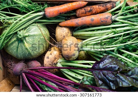 Closeup of freshly harvested vegetables (turnips, beetroots, carrots, round marrow), top view