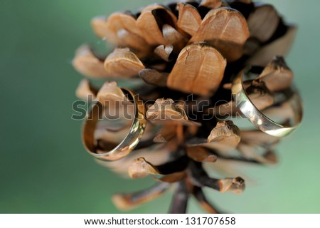 closeup of golden rings on cone - stock photo