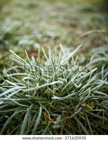 Closeup of grass covered with frost in the morning - stock photo