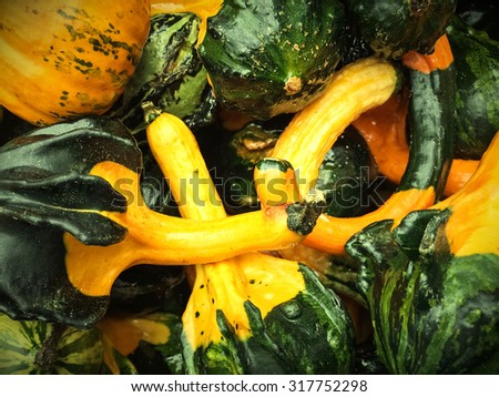 Closeup of green and yellow decorative gourds. - stock photo