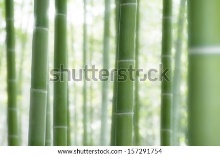 Closeup of green bamboo plant in forest - stock photo