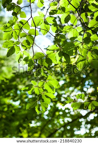 closeup of green forest leaves  - stock photo