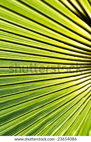 closeup of green palm leaf