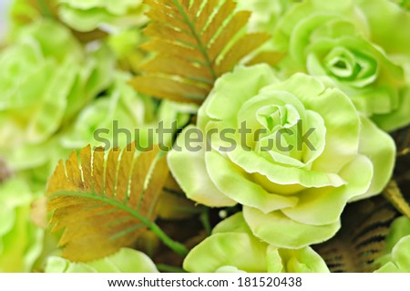 Closeup of green roses.