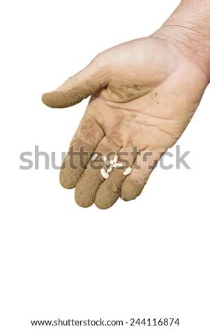 Closeup of hand planting bean seeds - stock photo