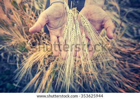 Closeup of Hands from male farmer with barlay, vintage effect - stock photo