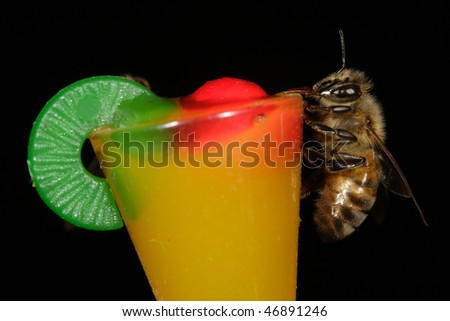 Closeup of honey bee sipping from miniature mai tai glass with black background - stock photo