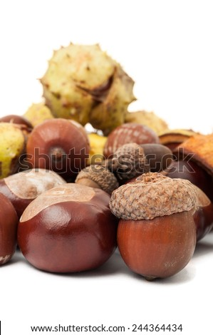 Closeup of horse chestnuts and acorns - stock photo