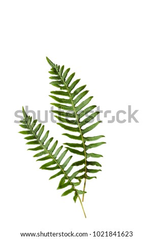 Closeup of isolated green ferns