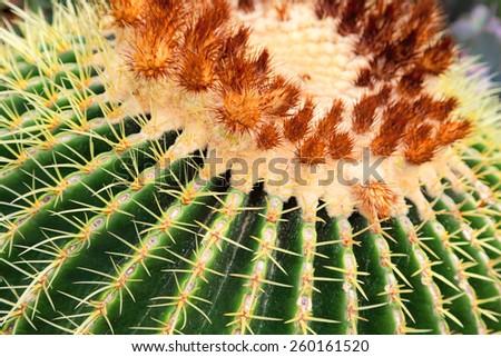 Closeup of  large cactus - stock photo