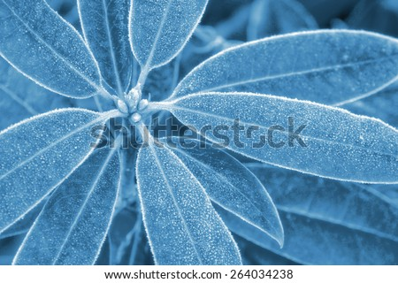 Closeup of leaves overlaid with heavy frost - stock photo