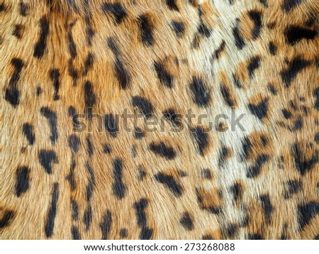 Closeup of leopard fur with lots of detail, perfect wild animal background - stock photo