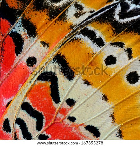 Closeup of Leopard Lacewing butterfly's wing.(Cethosia cyane) - stock photo