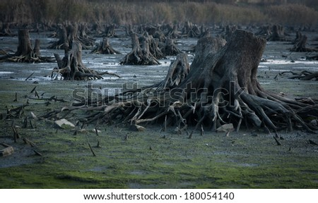 Closeup of logs in a deforested area - stock photo