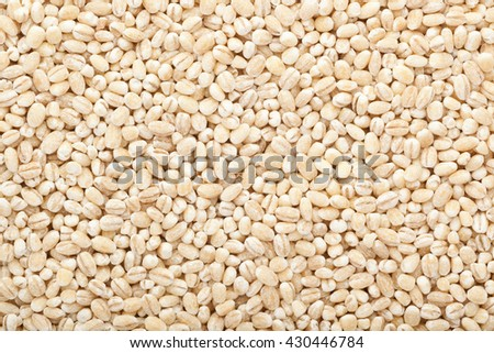 Closeup of lots of barley grains