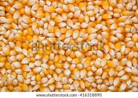 Closeup of lots of raw corn kernels - stock photo