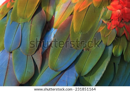 Closeup of macaw feathers, green winged macaw