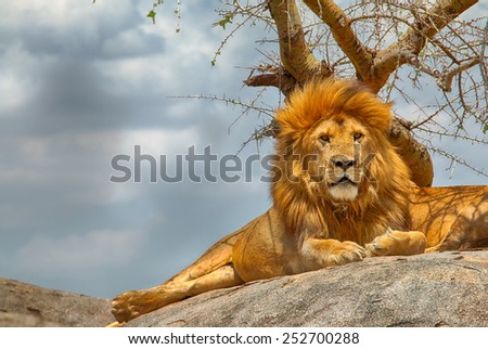 Closeup of male lion sitting on a rock facing straight, with menacing clouds in the background, at Serengeti National Park, Tanzania - stock photo