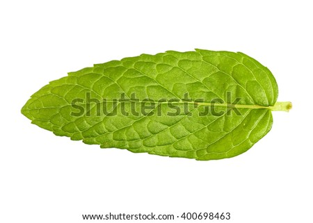 closeup of mint leaf isolated on white