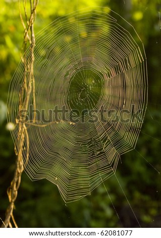 Closeup of morning dew on a spiderweb - stock photo