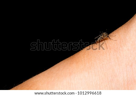 Closeup of mosquito on human skin. Mosquito can cause zika and dengue . Selective focus and crop fragment.