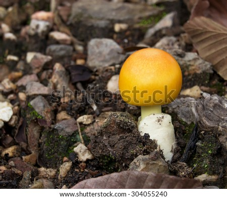 Closeup of mushroom in the forest