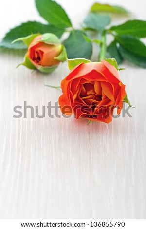 Closeup of orange rose on white wooden background
