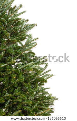 Closeup of part of a real evergreen Christmas tree with no decorations isolated on white background