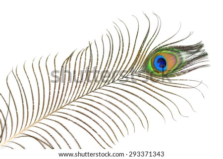 Closeup of peacock plume isolated on white background