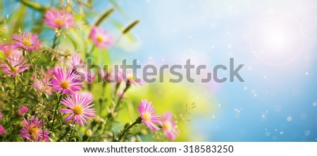 Closeup of pink flowers - stock photo