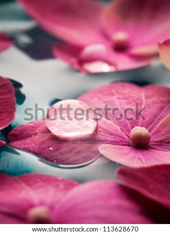 Closeup of pink hortensia flowers floating in water - stock photo