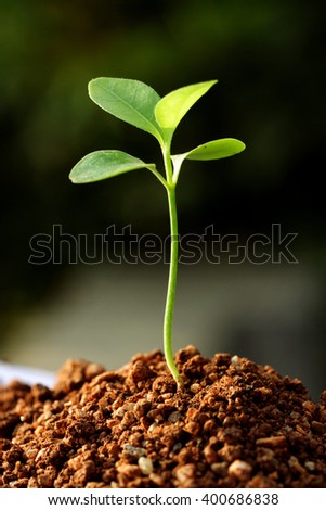Closeup of plant growing from soil - stock photo