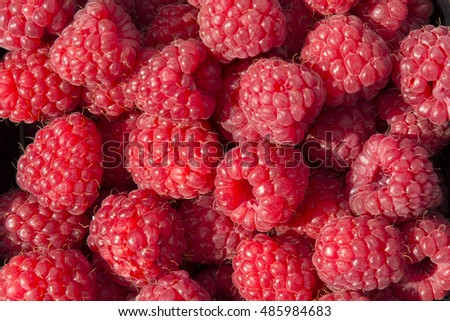 closeup of raspberries in Norway