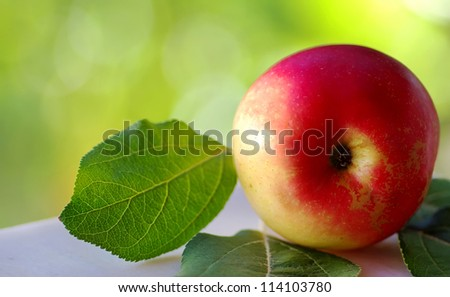 Closeup of red apple on green background