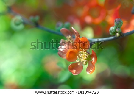 Closeup of red blossom flowers. Shallow depth of field.