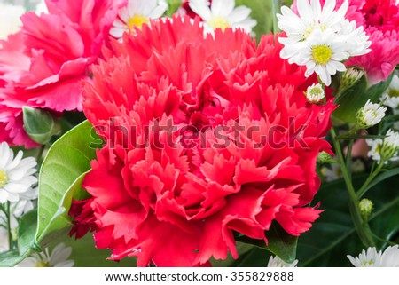 closeup of red carnation flower