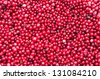 Closeup of red Cranberries as Texture - stock photo