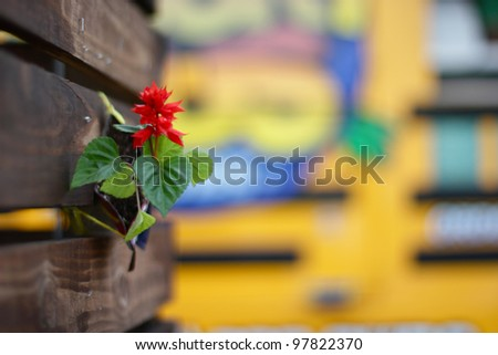 Closeup of Red Flower - stock photo