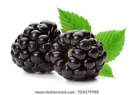 Closeup of ripe blackberries with leaves isolated on the white background, clipping path included.